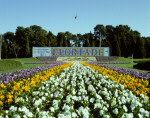 Floriade display of massed plantings of spring flowers and signage on City Hill. Image number 003983, ACT Heritage Library Collection.